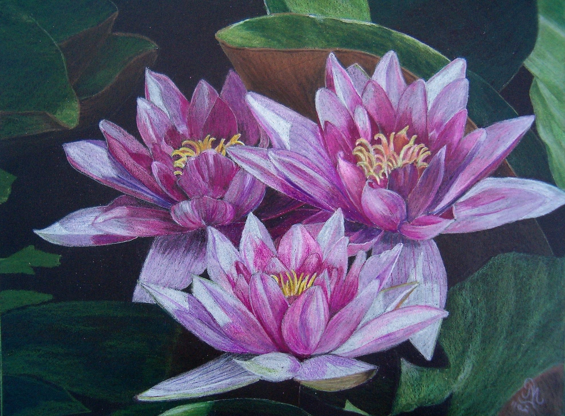 Image result for realistic colored pencil drawings