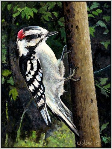 Downy Woodpecker In The Woods Outside My Window.  - Paul Wolber