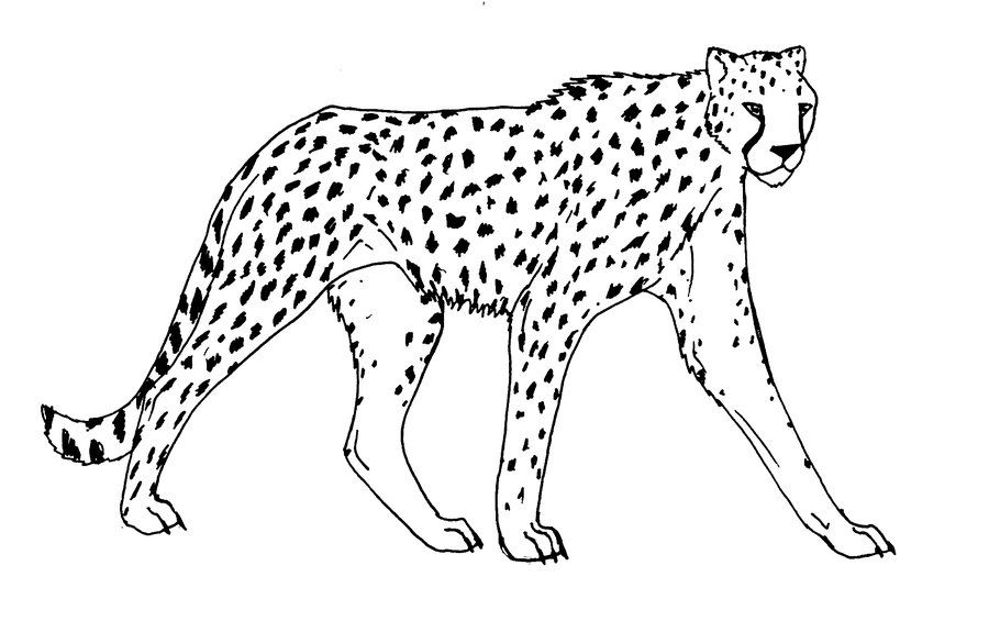 Pin by luke on A Teenagers Guide to Survival: cheetah