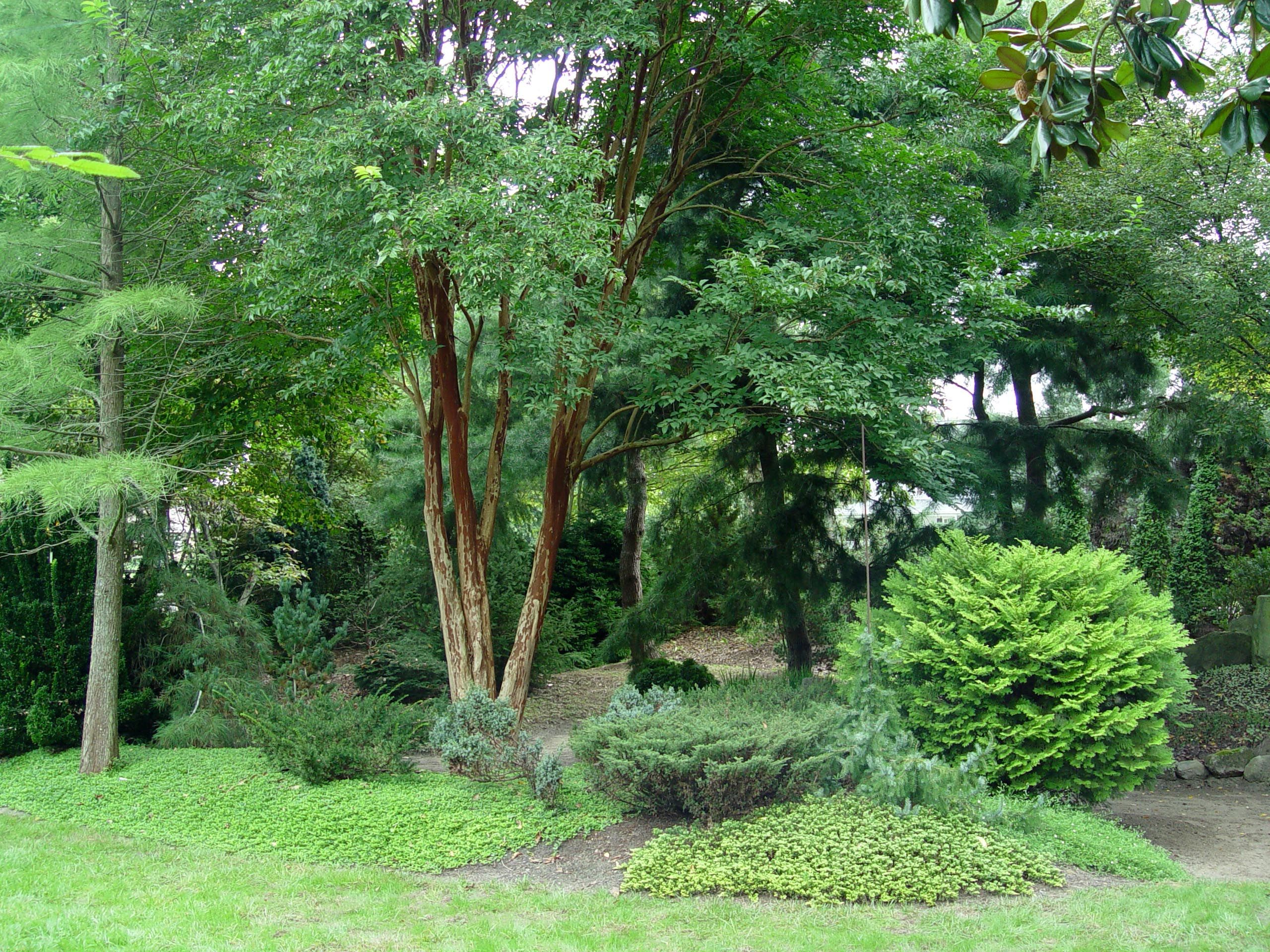 Planting A Natural Hedge Mixed Plantings That Create A