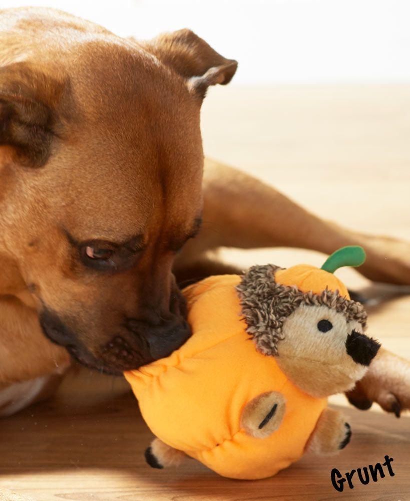 Holiday Grunting Hedgehog Dog Toys Dog Toys Dogs Your Dog