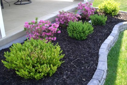 Types Of Shrubs And Bushes For Landscape Photos And Design Ideas