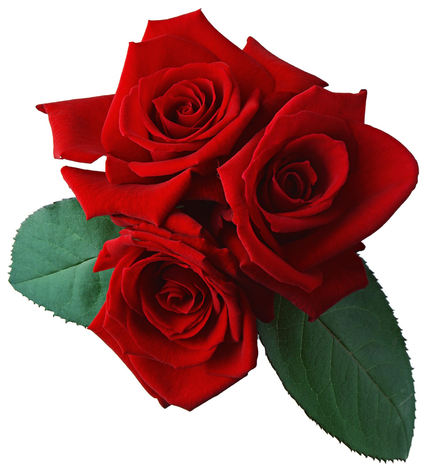 Editing Tutorials Red Rose Png Rose Flower Png Red Roses