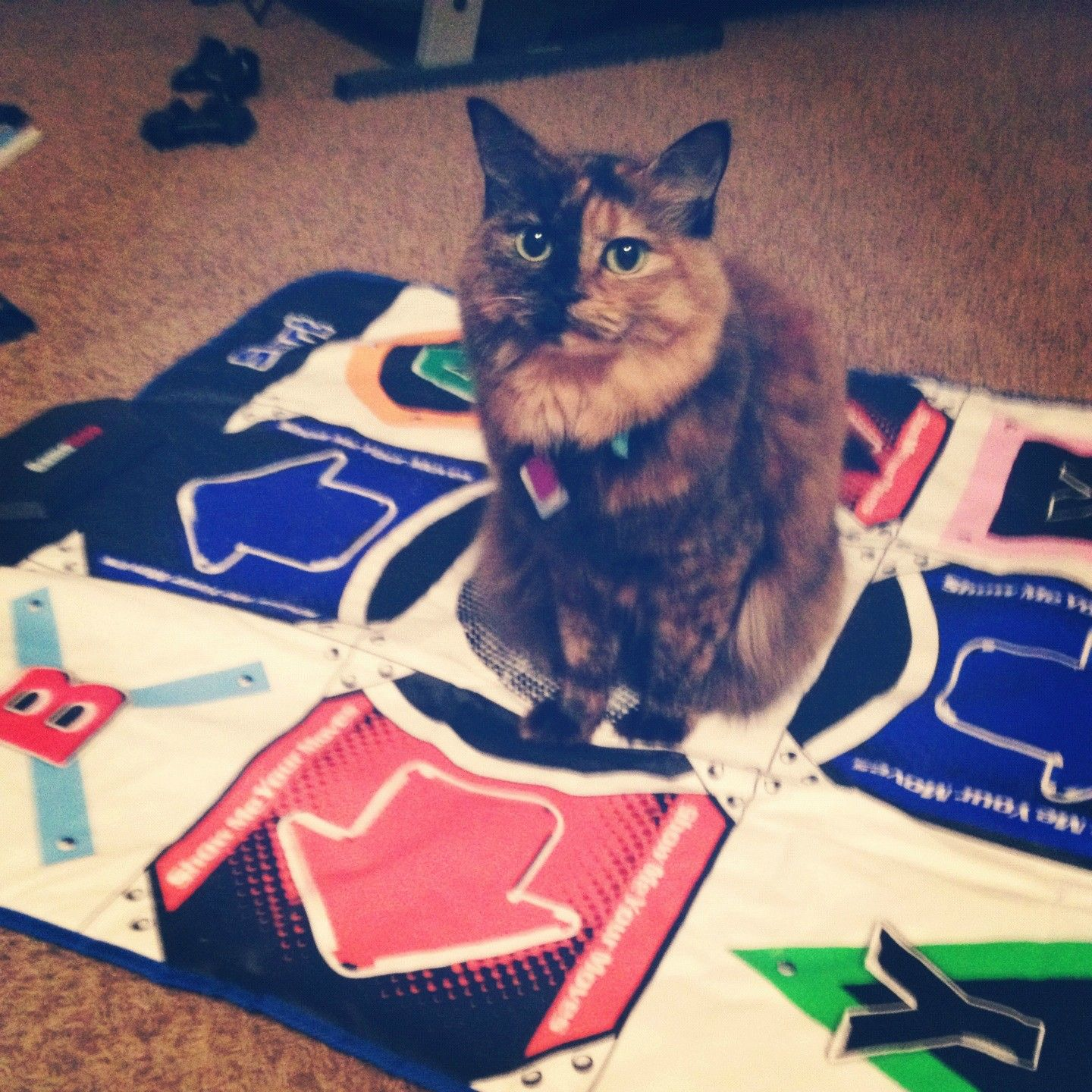 My Kitty Decided It Was Her Turn To Play Dance Dance Revolution