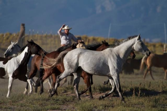 Running horses during the Bobbie Goodrich and Susan Burns workshop at Zapata Ranch. *Photo by Bobbie Goodrich #ZapataRanch