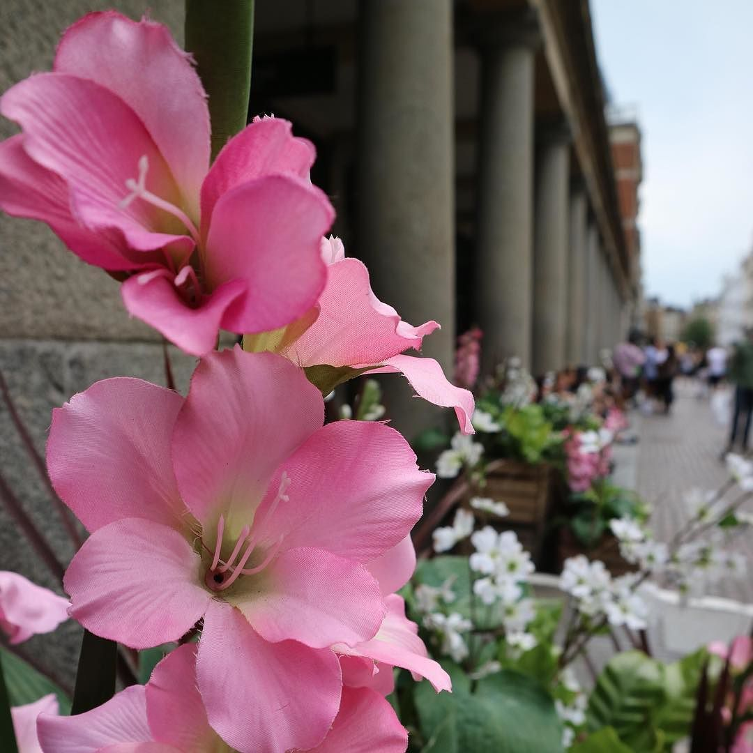 Vivid pink flowers // coventgarden london Flowers