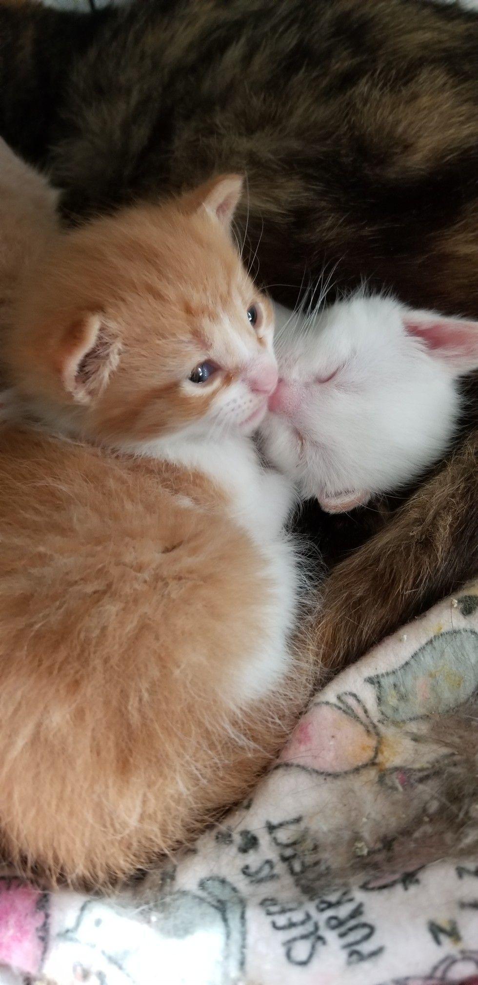 Kittens Kittens Cutest Pretty Cats Cute Animals