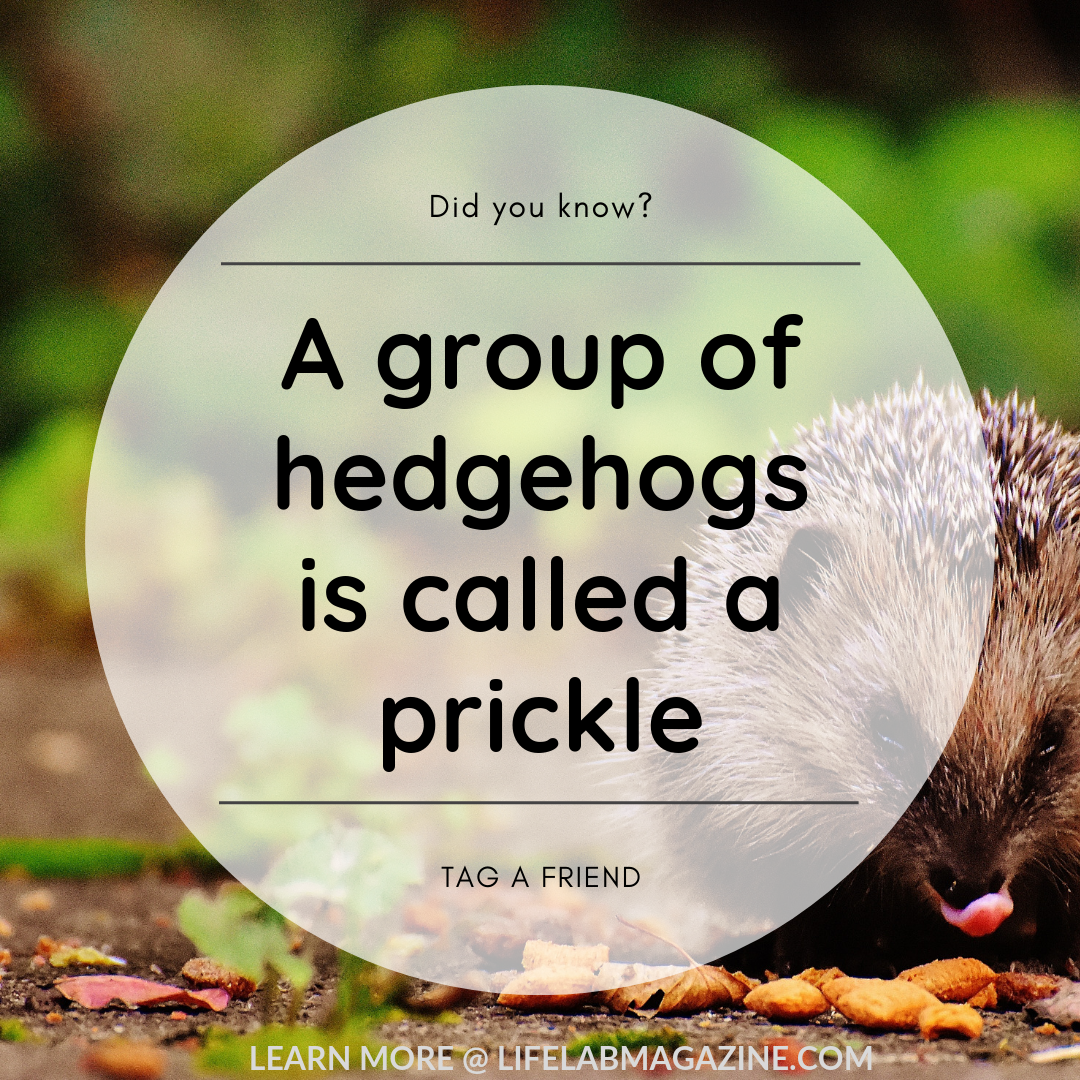 Did you know? Mind blown, Did you know, Trivia