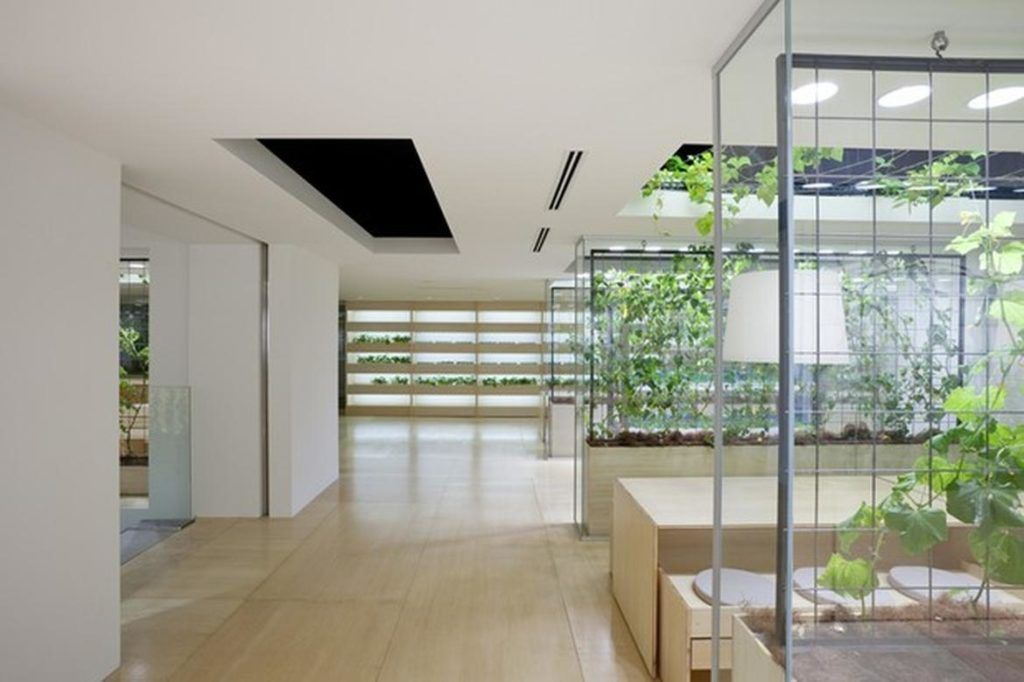 Why Plants are a Must for your Office :http://fuzeinteriors.co.nz/why-plants-are-a-must-for-your-office/