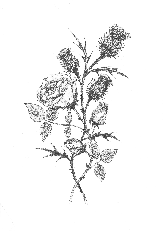 Rose Amp Thistle