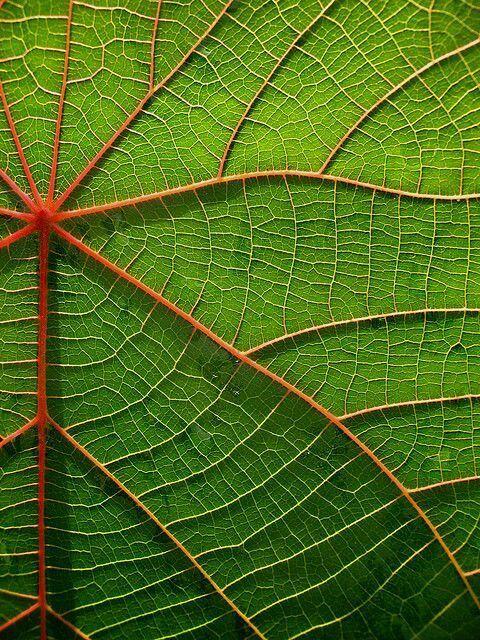 Image Pattern Idea Leaf Ribbing Texture Photography Patterns