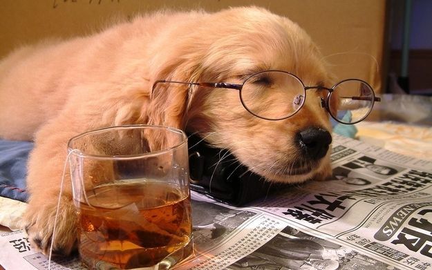 This Puppy Who Really Hopes The Tea He S Drinking Isn T Decaf Sleeping Dogs Pet Dogs Puppies Sleeping Puppies