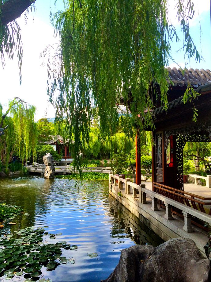 Finding Peace in Sydney\'s Chinese Garden of Friendship | Chinese ...