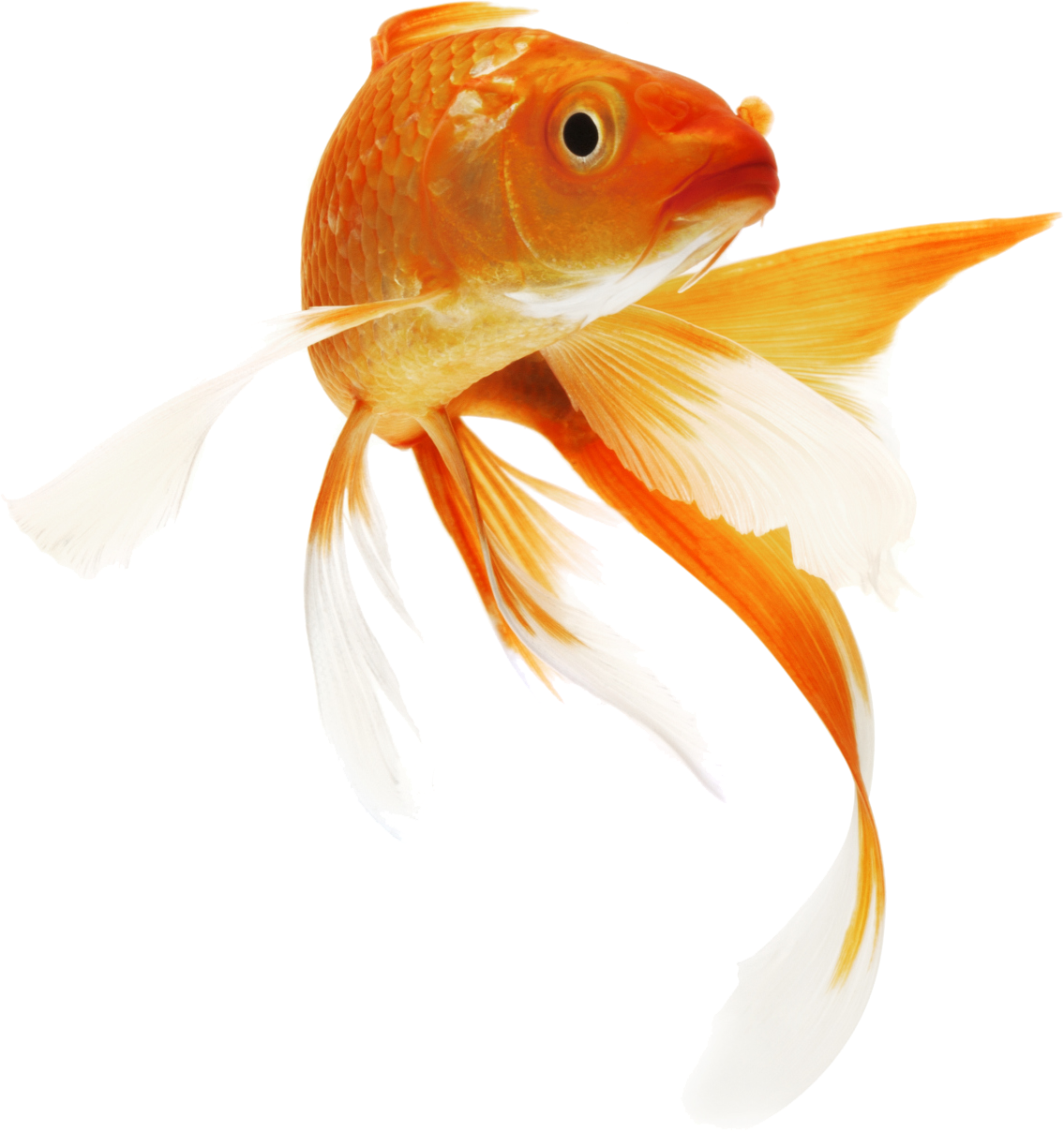Image Uploaded By Seulgi Find Images And Videos About Cute Kawaii And Edit On We Heart It The App To Get Lost In Wha Fish Painting Fish Drawings Goldfish