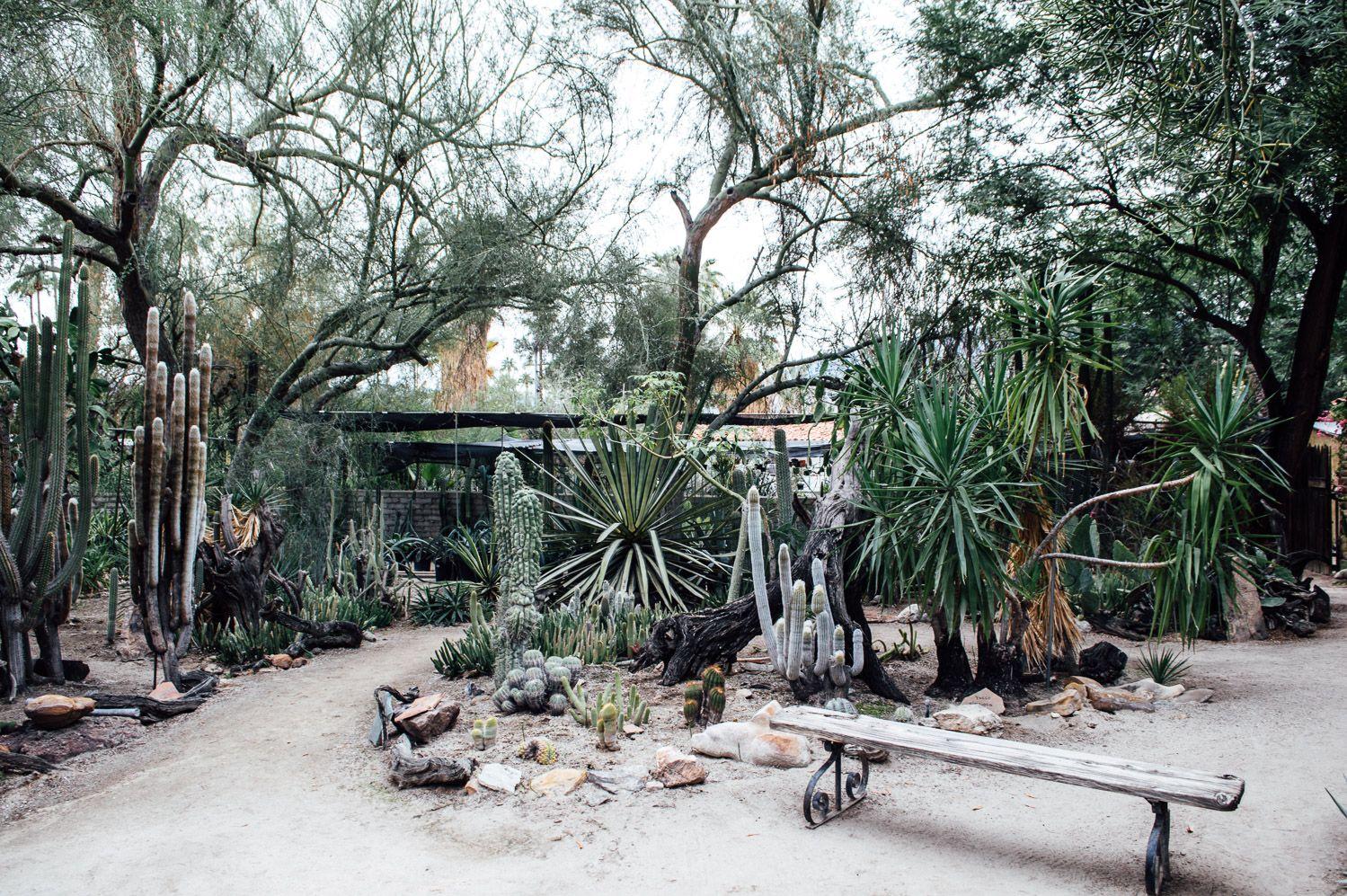 Charmant Moorten Botanical Gardens Palm Springs California Weekend 20 (1499×997)  | December | Pinterest | Gardens, Spring Garden And Spring