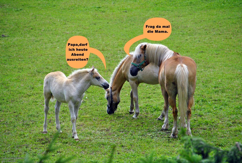 Pferde,Fohlen,Tiere,Natur,Spaß Pferde, Tiere
