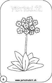 Petrklic Omalovanky Pinterest Paper Flowers Giant Paper