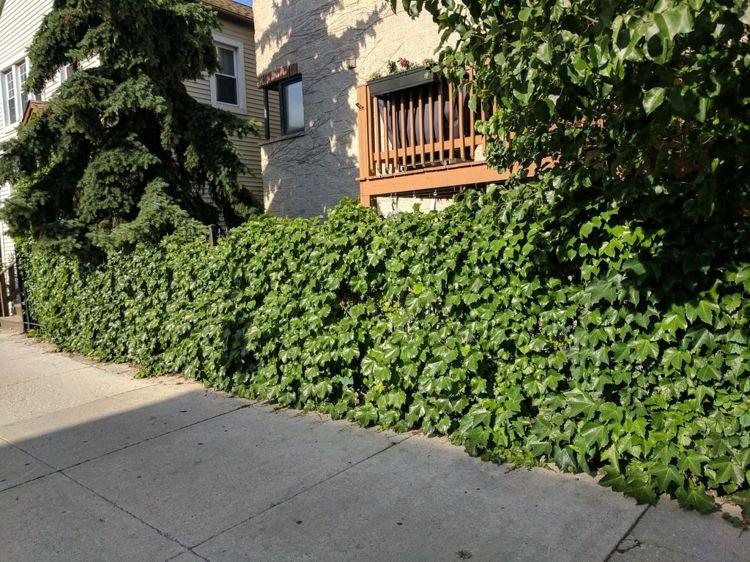 Pin Auf Sichtschutz Fur Garten Und Terrasse