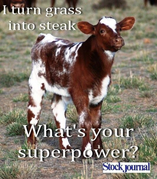 Lol Sooooo True Cows Funny Cute Cows Animals