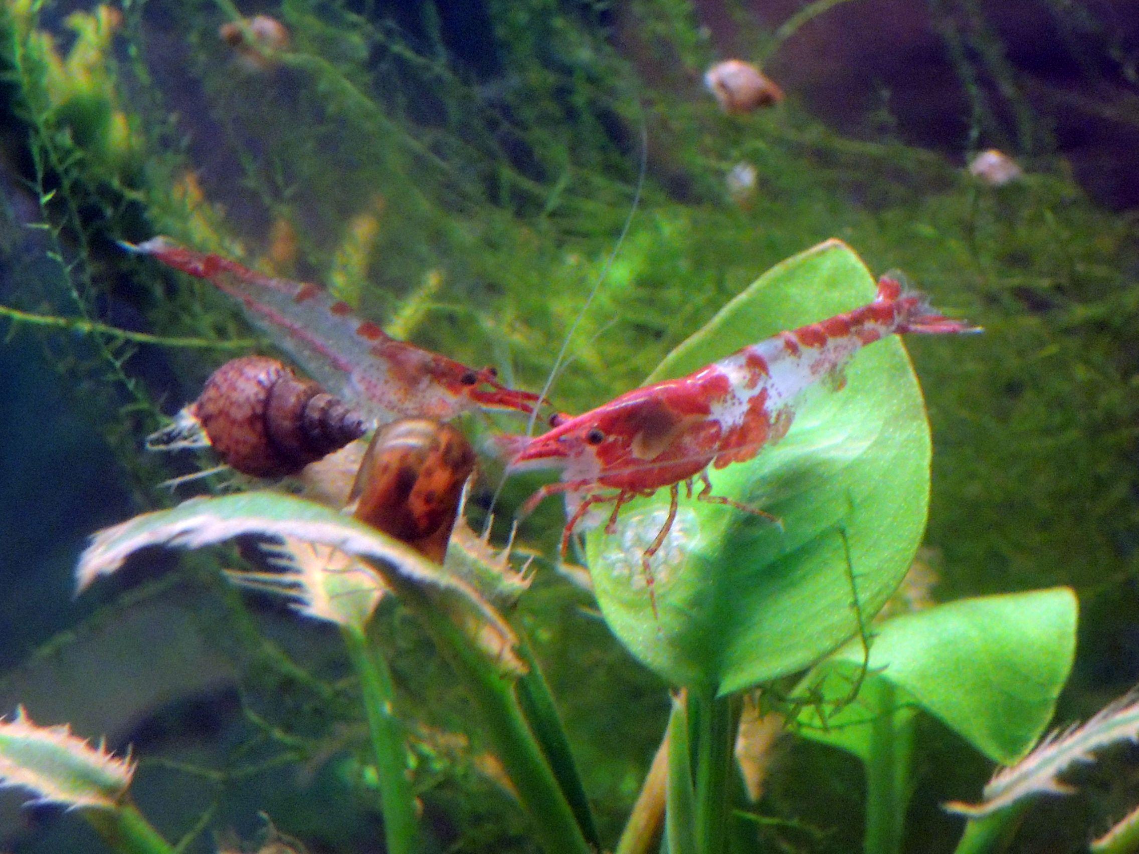 321c7a7a31ceefa4946ebe4d23910c7f Luxe De Crevette Aquarium Des Idées