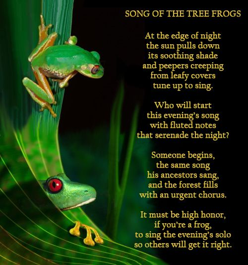 Image Result For Poems About Frogs Tree Frogs Frog Poem A Day