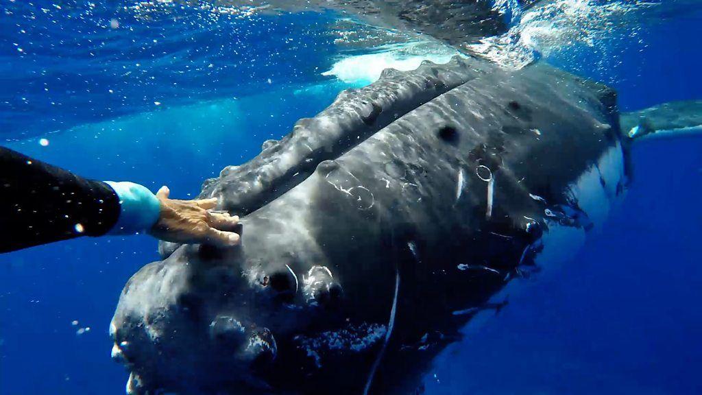 A marine biologist says a humpback whale saved her from a shark - marine biologist job description