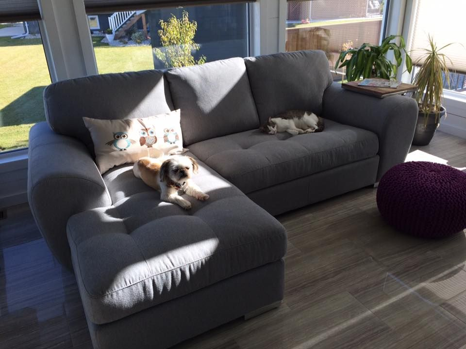 We Love Our New Palliser Love Chaise At Least The Pets Sure