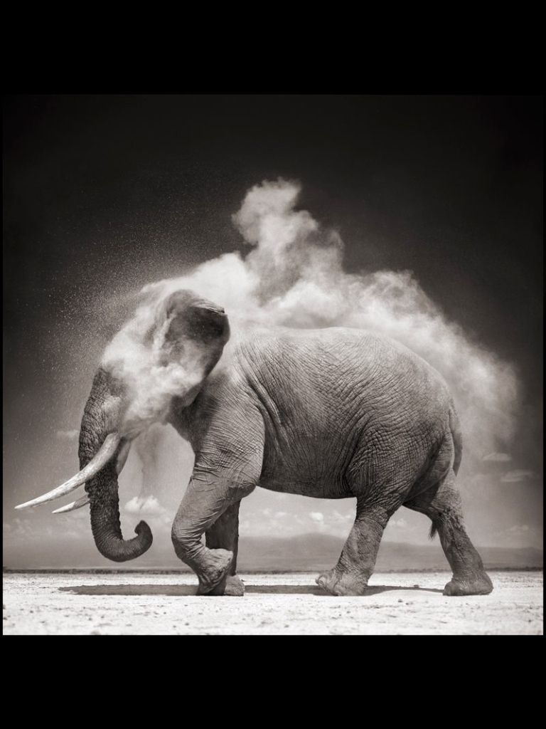 Elephant dust bath. Nick Brand