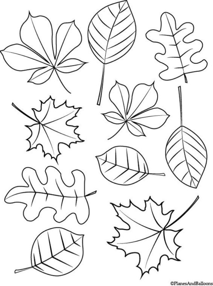 Leaves Coloring Pages 08 8211 Leaves Coloring Pages Fall Coloring Sheets Leaf Coloring Page Fall Leaves Coloring Pages