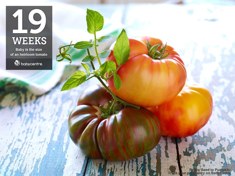 At 19 Weeks Your Baby Is The Size Of An Heirloom Tomato Baby