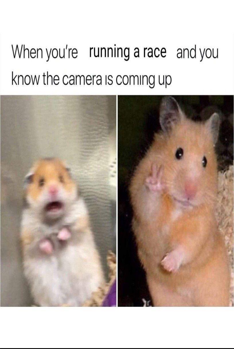 Best Hamster Meme Collection Its So Funny Em 2020 Filmes De Terror