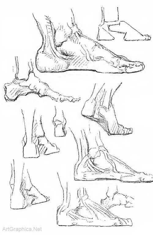 how to draw feet   Study Drawing   Pinterest   Anatomy, Drawings and ...