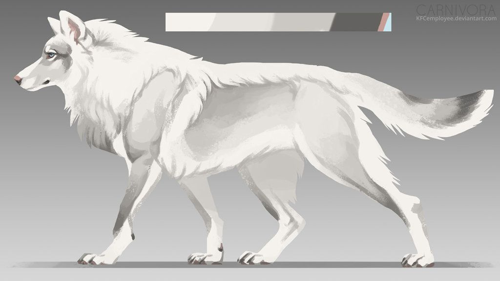Photo of White wolf adopt: SOLD by Chickenbusiness on DeviantArt
