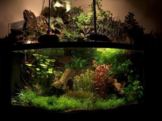 Waterfall fish tank thread waterfalls in aquariums for Waterfall fish tank