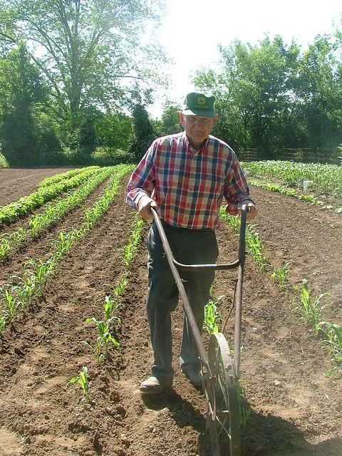 Farmer in his well-tended garden with an old hand-plow.