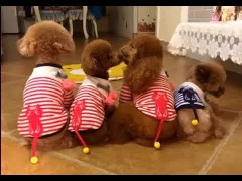 Four Little Tails Dog Training School Dog Training Videos Dog
