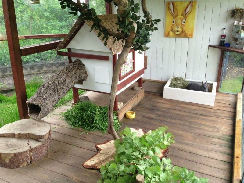 aussengehege fotos tiere kaninchengehege kaninchen