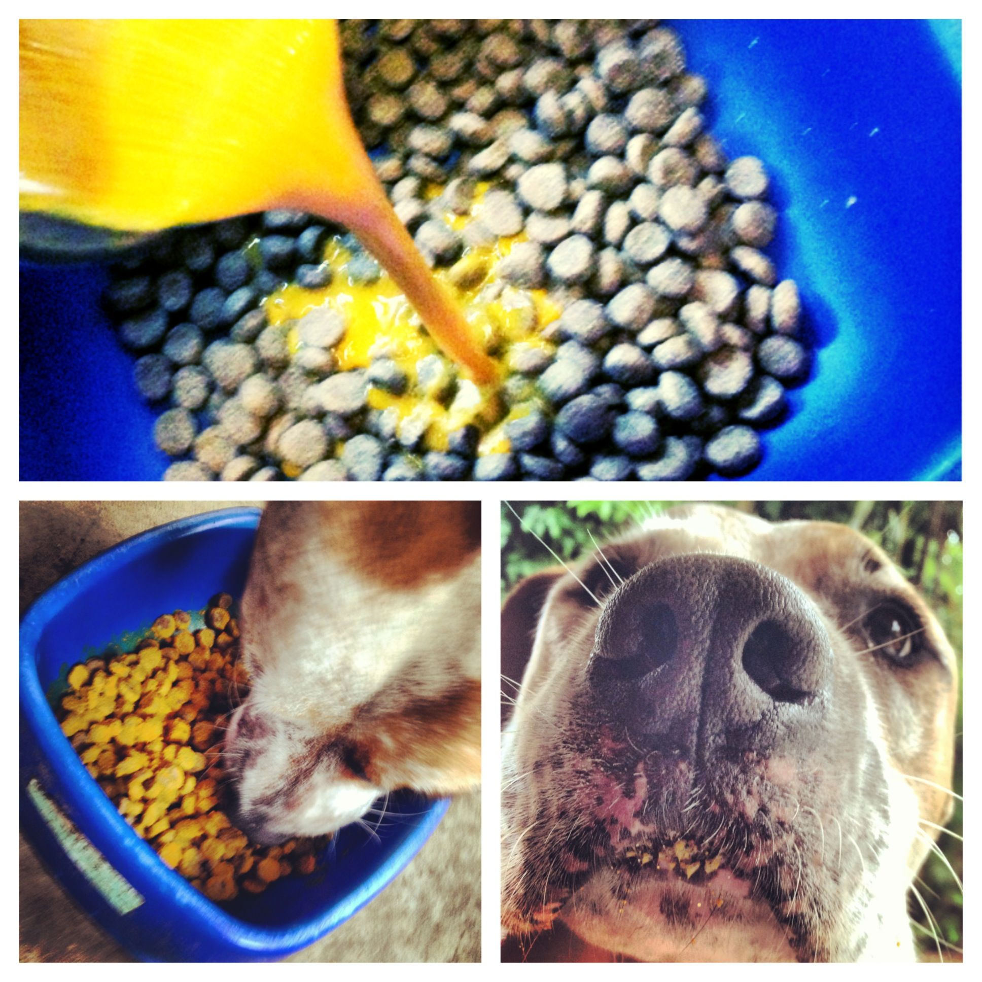 5 Easy Natural Ways To Ease Your Dog S Arthritis Dog Food