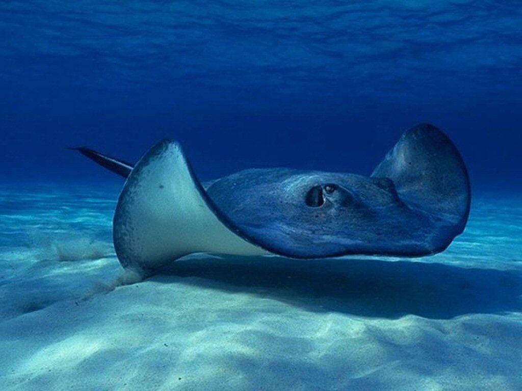 картинки про подводных животных раковины, пятки