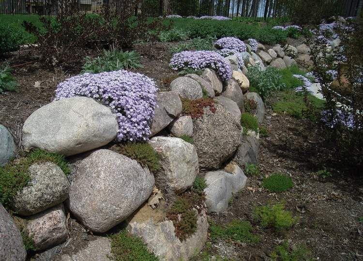 naturstein trockenmauer bepflanzen geignete pflanzen f r mauerfugen garten. Black Bedroom Furniture Sets. Home Design Ideas