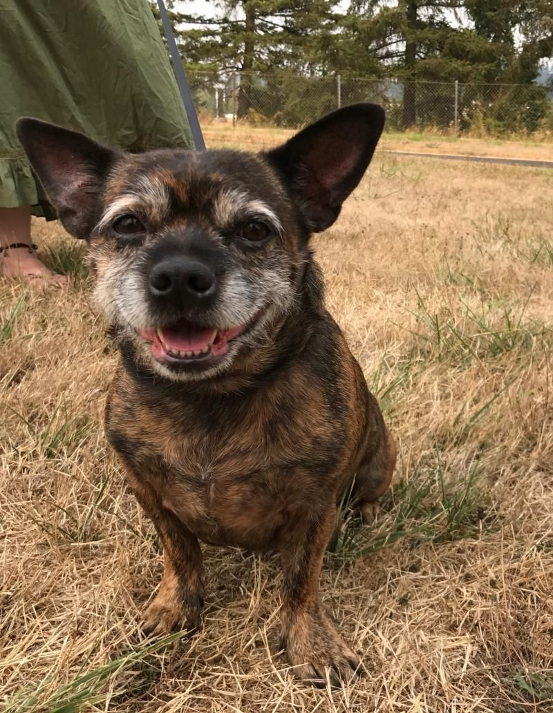 Adopt Annabelle on Petfinder Terrier mix dogs, Dog