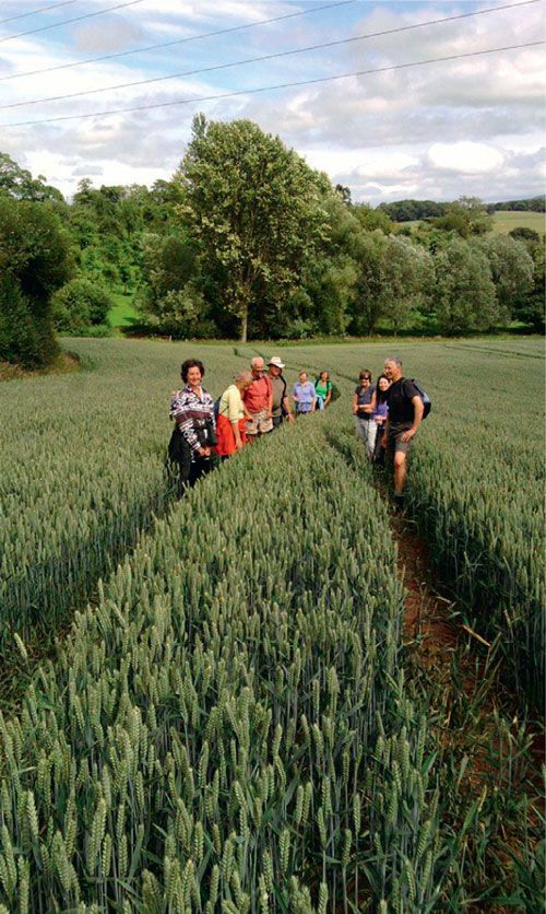 Walking in fields in Hereford HerefordshireSubmit your photos to our online #gallery - http://www.absoluteherefordshire.co.uk/gallery