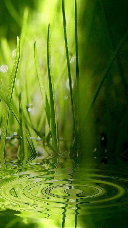 Water Grass Circles Drop 49774 640x1136 Hd Nature Wallpapers Best Nature Wallpapers Hd Nature Iphone Wallpaper