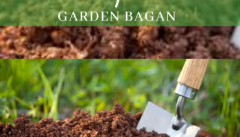 322159982b1c28beac35222ad93baeb8 - How To Get Rid Of Mildew In Garden Soil
