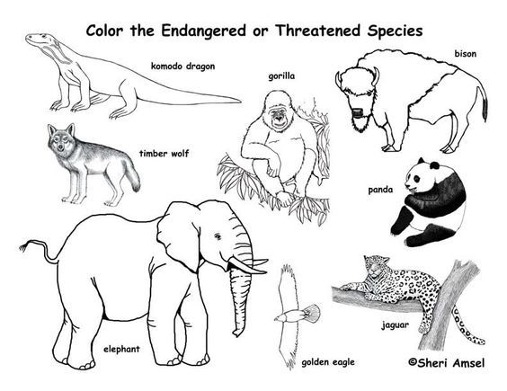 Pin by Bri on Bri Pinterest - new coloring pages about science