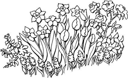 Flores En El Jardín   Coloring / Colorear   Pinterest