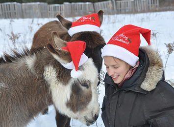 Our holiday card tradition. Courtesy: Alyssa de Villiers, Golden Grove   Farm. Willseyville, NY (USA)