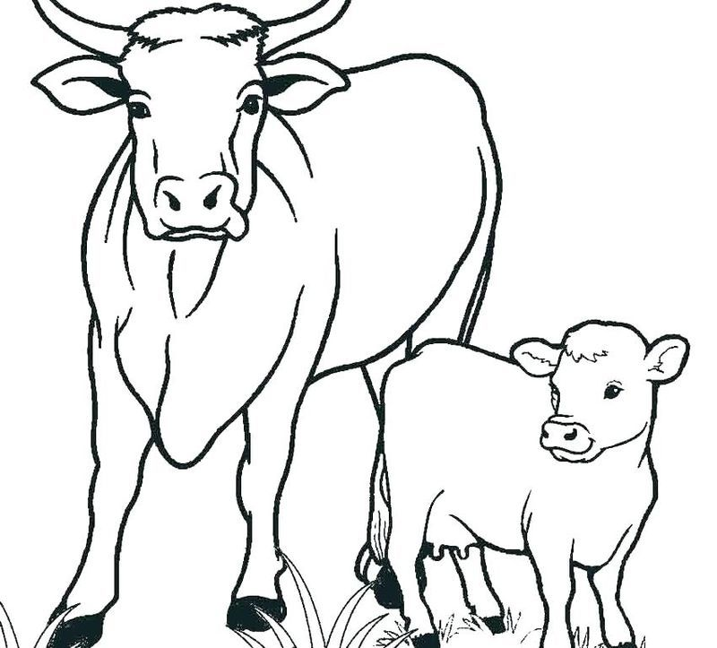 Image Result For Cartoon Cow With Spots Color Page Gambar Kartun Warna