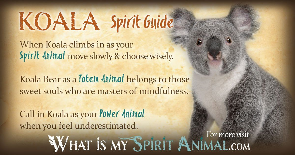 c1b1c6adf In-depth Koala Bear Symbolism & Meanings! Koala Bear as a Spirit, Totem, & Power  Animal. Plus, Koala Bear in Celtic & Native American Symbols, & Dreams!