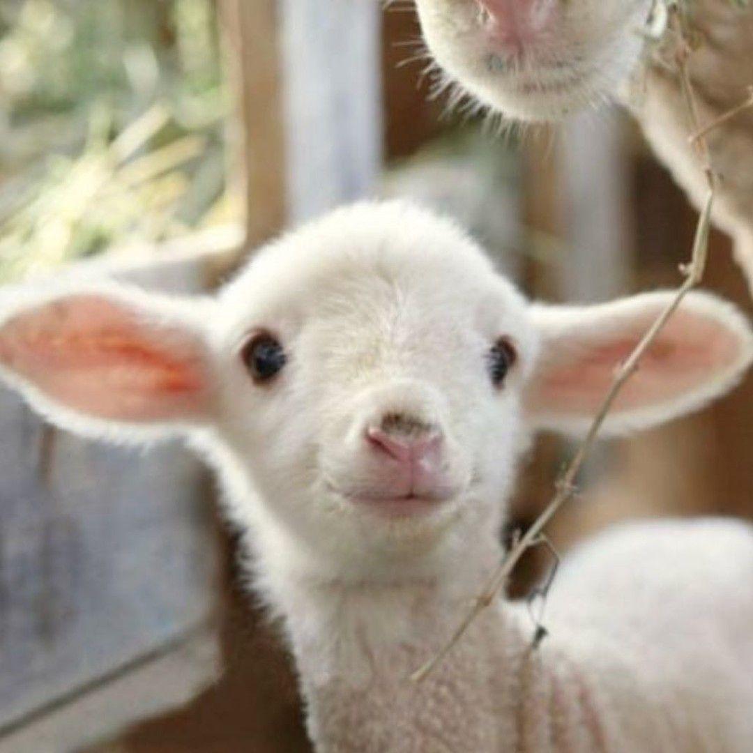 Moodboard Aesthetic Tumblraesthetic Dreamy Inspo Moodinspo Sleepwear Sleep Bed Pajamas Ho In 2020 Baby Animals Animals Cute Animals